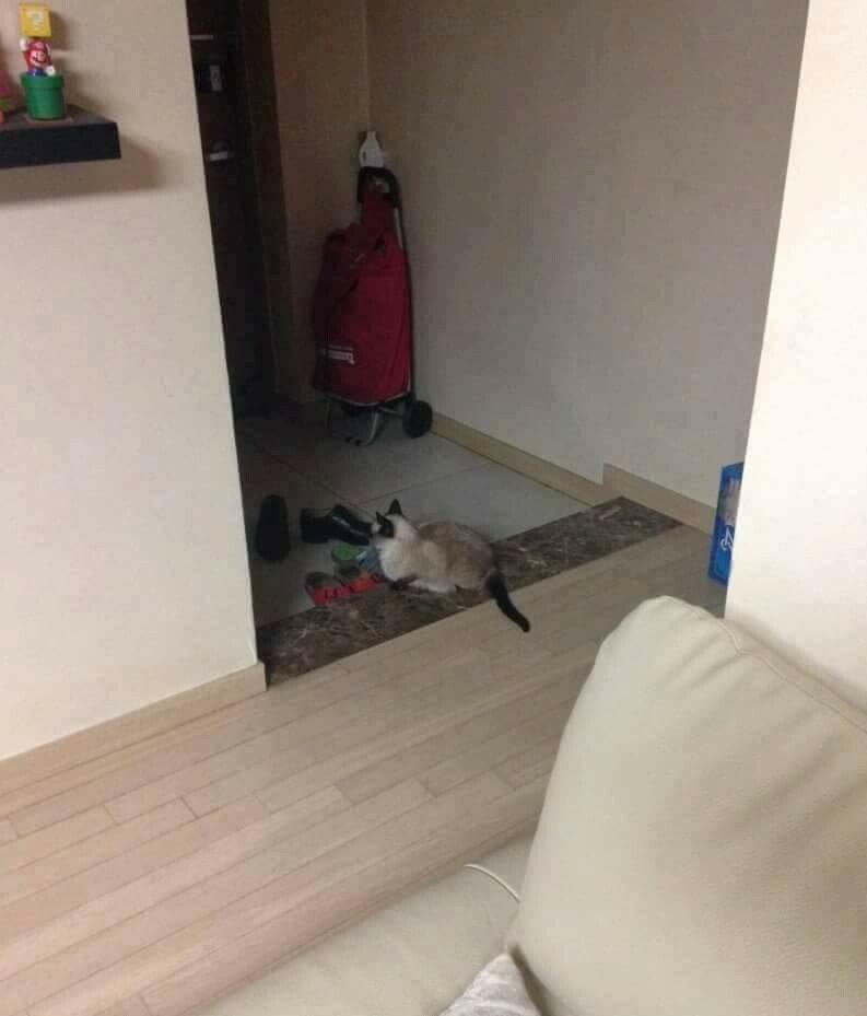 반려동물 키우는 집 특징4.jpg