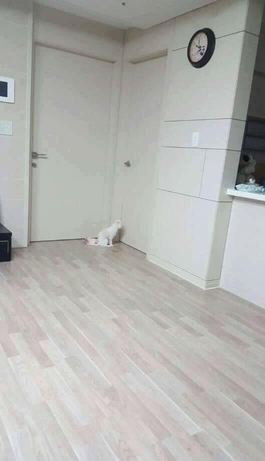 반려동물 키우는 집 특징3.jpg