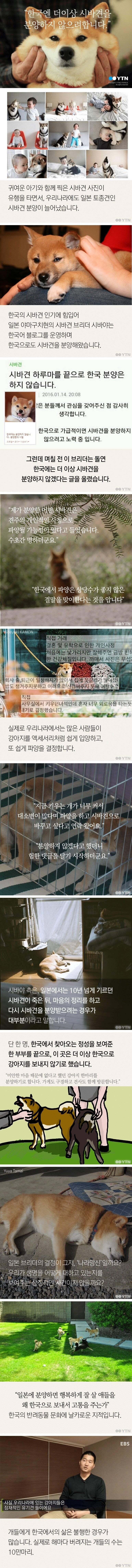 한국엔 더이상 시바견을 분양하지 않으려 합니다.jpg