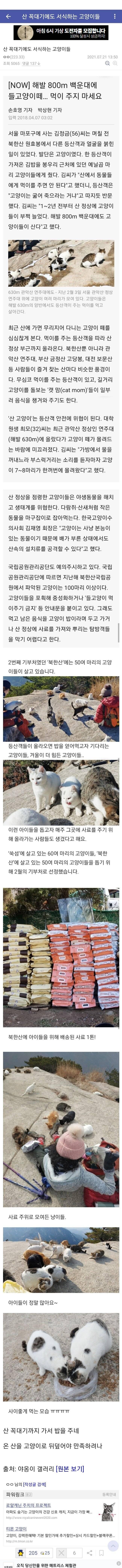 산 꼭대기에도 서식하는 고양이들.jpg